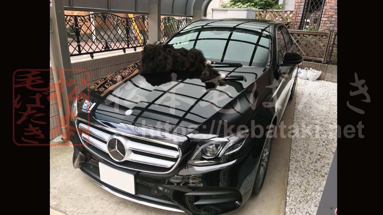 Mercedes Benz, E200 (W213) と 松本毛ばたき