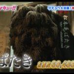 TBSテレビ「トコトン掘り下げ隊!生き物にサンキュー!!」